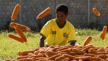 A boy sorts corn in Dili, where life continues to be a struggle for many people.