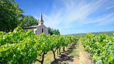 Chartreuse de Valbonne vineyard in Languedoc.