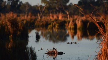 Environment flows are necessary to maintain the health of the rivers, including the Macquarie Marshes in western NSW.