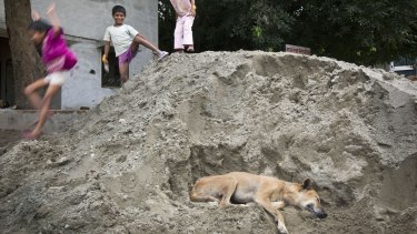 Children play in a pile of sand where a dog is resting in Delhi, which has an estimated 325,000 strays.