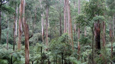 Parks Victoria insiders have warned of threats to parts of the state because of funding cuts.