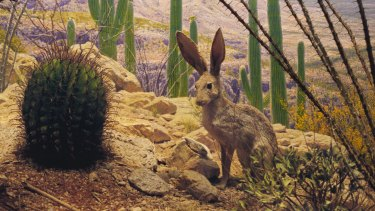 Anne Zahalka is among the 12 contemporary Australian artists in the exhibition with her work <i>Jack Rabbits</I>.