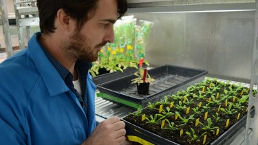 Dr Olivier Van Aken of the University of Western Australia gets up close and personal with his pet plants.
