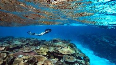 Corals near Orpheus Island, North Queensland.