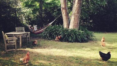 Relaxing with the chooks in the garden at Crystal Creek Meadows.
