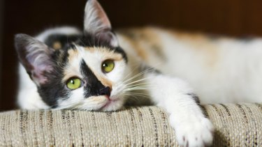 Cats that ate the food have reportedly become ill, though no link has been established.