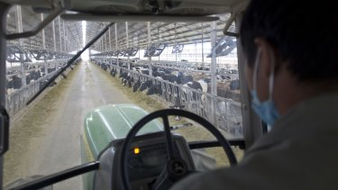 A man drives a tractor to dump feed at a dairy farm in Dongying, Shandong Province, China.