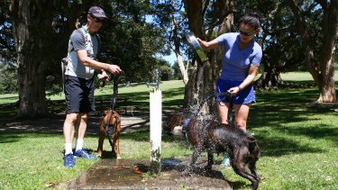 A couple pours water on their dogs to escape the Sydney heat.
