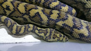 A 10-year-old girl was taken to hospital after being bitten by a snake in Ningaloo.