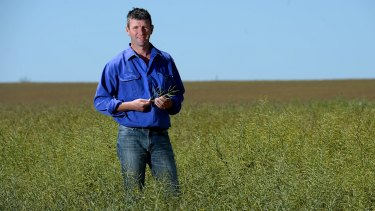 Farmer Brett Hosking in his canola field near Quambatook.