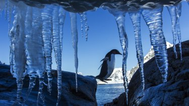Warming up: possible record temperatures recorded on the Antarctic Peninsula.