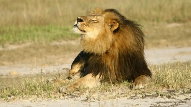 Cecil the lion was killed by a US tourist, sparking widespread outrage.