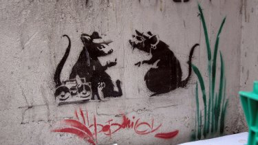 An example of Banksy's rat stencils, which have dwindled in number in Melbourne because of vandalism, construction and mishaps.
