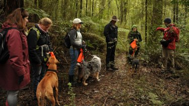The Otways' conservation dogs await their instructions.