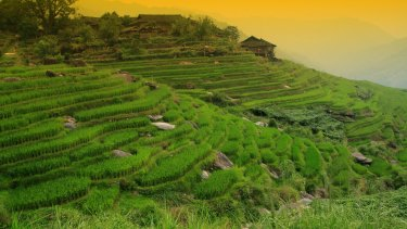 Ubud in Bali: The small island is one of the most popular overseas destinations for Australians.