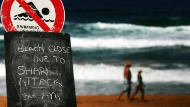 There have been a spate of shark attacks in WA.