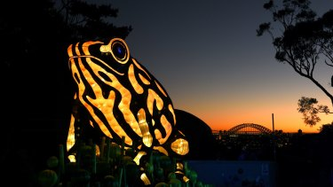 This year was the first time Taronga Zoo participated in the Vivid Sydney event.