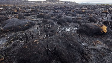 Hectares of burnt cushion plant.