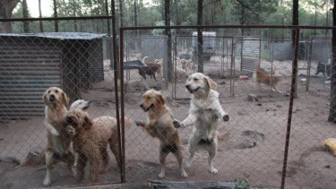 Dogs at a puppy farm in northern NSW.