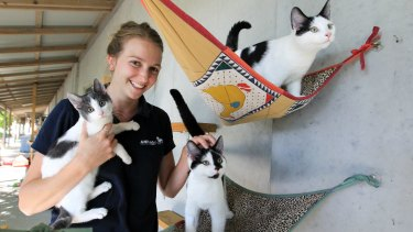 Animal behaviourist Erica Pankhurst at the Animal Welfare League with cats available for adoption.