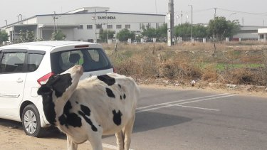 Minus the cows, the industrial estate could be anywhere in the world.