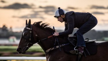 Hugh Bowman will be riding Winx on Saturday, looking for the champion mare's 17th successive victory.