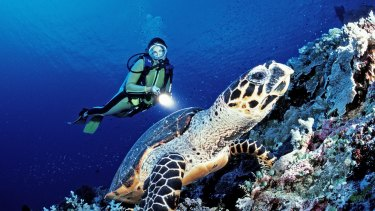 A rich ecosystem is under pressure from island building by China and neighbouring nations. Scuba diver and a Hawksbill sea turtle in the South China Sea, near Malaysia.