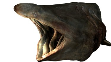 The head of the basking shark model.