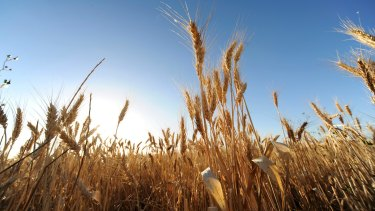 Crops have suffered from inconsistent yields and new threats from redistribution of disease and pests.
