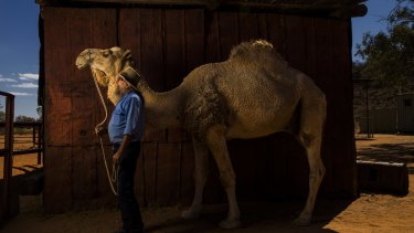 """Camels Australia proprietor Neil Waters with """"Bull""""."""