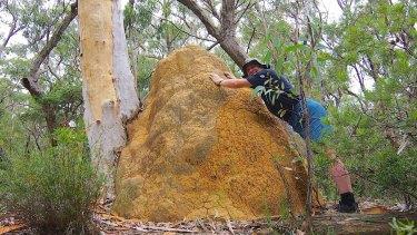 Geocacher Thomas Schulze found this termite mound in Morton National Park.
