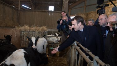 Emmanuel Macron, France's independent presidential candidate tours a cattle shed while visiting a dairy farm in Gennes-sur-Glaize, France.