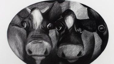 Cow portrait by William Robinson.