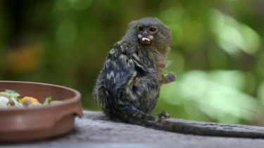 Jo is the mother of two monkeys who went missing and the mating partner of Gomez, the other missing monkey.