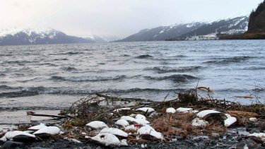 The new research is one in a string of studies that have used such a method to detect old carbon emerging from Arctic lakes or rivers.