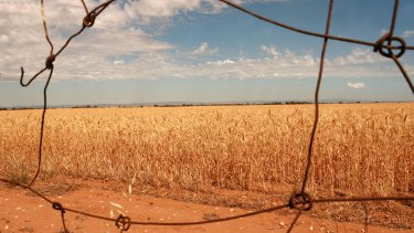 Grains under strain: winter rains are becoming less reliable.