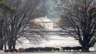 The Tasmanian government will investigate whether a state-owned energy company added to this week's devastating floods.