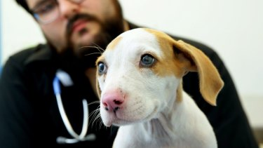 Sole survivor: The puppy has been named Lucky.