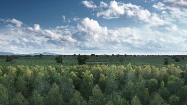 Carbon farming – a direct way to cut emissions, the government says.