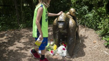 A child touches the head of a gorilla statue where flowers have been placed outside the Gorilla World exhibit at the Cincinnati Zoo.