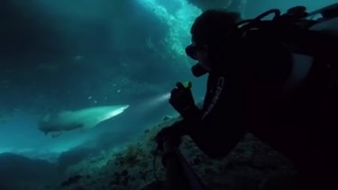 Diver Ryan Sanders and two mates discovered a group of grey nurse sharks in an underground cave off Rottnest Island on Tuesday.