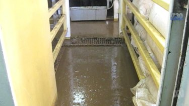 Footage on 7.30 showed floors centimetres-thick with excrement.