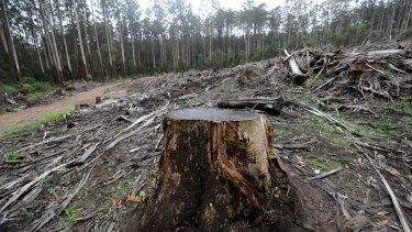 Logging in Victoria's Central Highlands