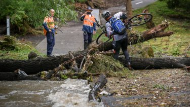 A cyclist attempts to cross a fallen tree at the Creek Parade Bridge at Nothcote on Friday morning.