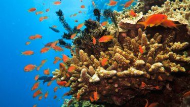 UNESCO hasn't been misled about the Great Barrier Reef's health, ministers have insisted.