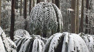 Snow in the hills around Lorne.