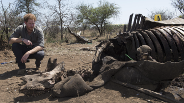 Prince Harry is  on Wednesday shown the carcass of a rhino slaughtered for its horn in Kruger National Park.