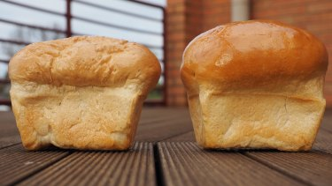 The larger loaf on the right was made with wheat grown in today's conditions. The loaf on the left was grown in high carbon dioxide conditions.