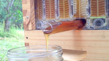 The Flow Hive taps into the hive and drains honey, without having to stress out the bees.