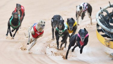 Many greyhounds were killed if they could not make an impact on the race track, according to Animal Liberation Queensland.